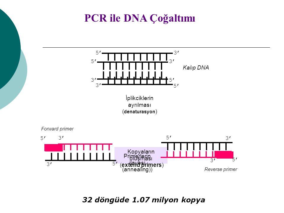 Kopyaların oluşması (extend primers) Kalıp DNA 5' 3' 5' 3' PCR ile DNA Çoğaltımı İplikciklerin ayrılması ( denaturasyon ) 5' 3' Primerlerin ilavesi (a