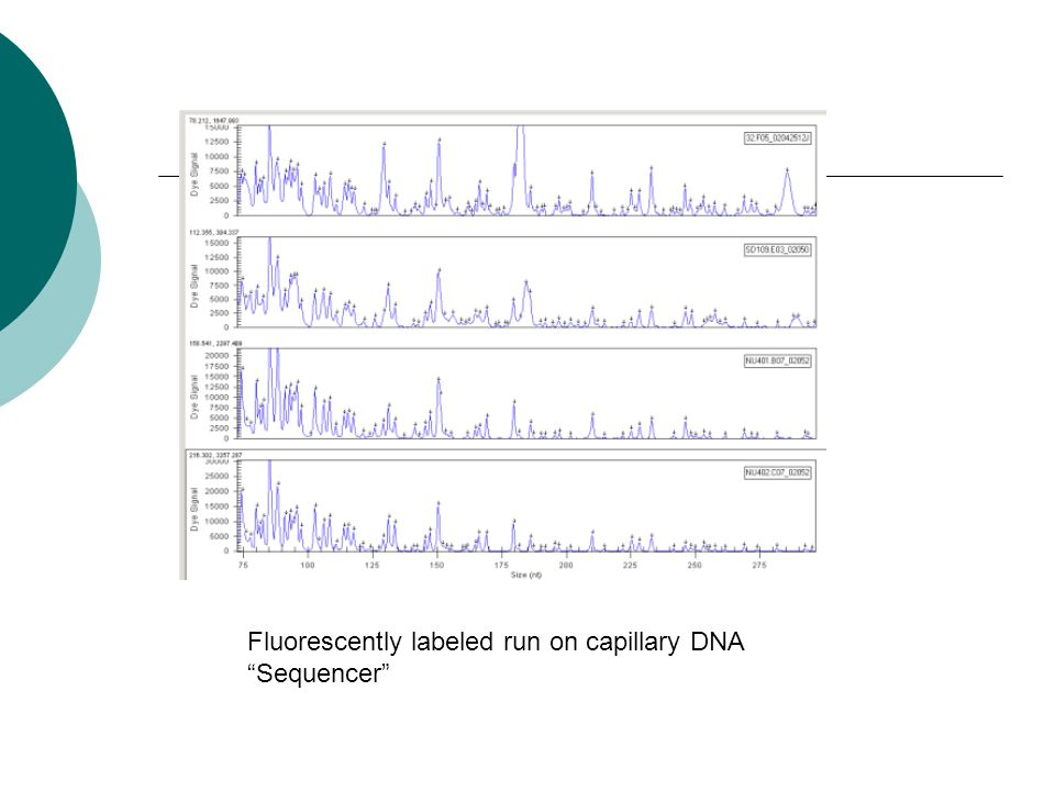 "Fluorescently labeled run on capillary DNA ""Sequencer"""