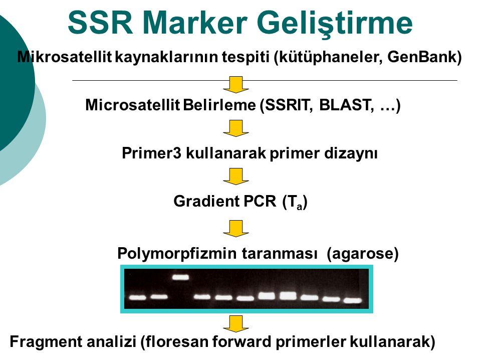 Primer3 kullanarak primer dizaynı Fragment analizi (floresan forward primerler kullanarak) Gradient PCR (T a ) Polymorpfizmin taranması (agarose) SSR