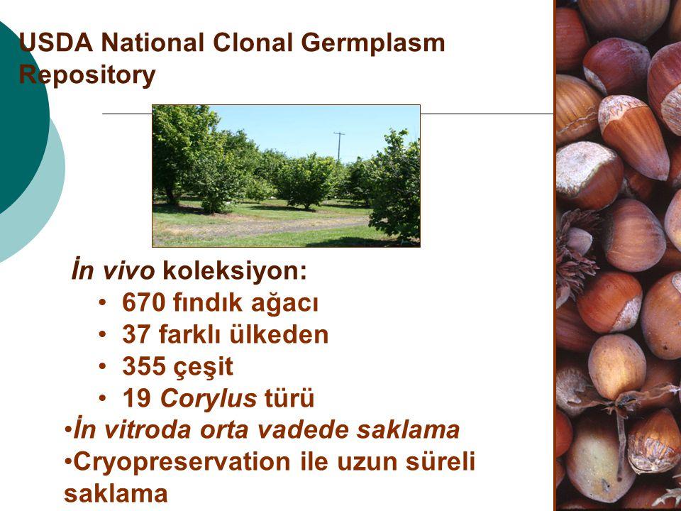 USDA National Clonal Germplasm Repository İn vivo koleksiyon: 670 fındık ağacı 37 farklı ülkeden 355 çeşit 19 Corylus türü İn vitroda orta vadede sakl