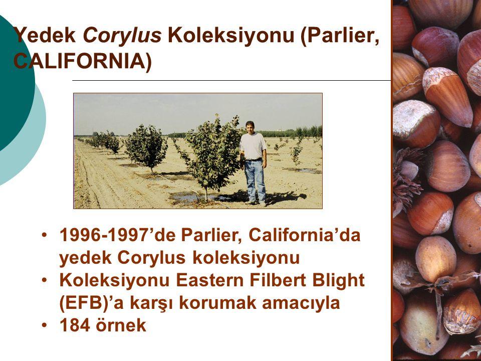 Yedek Corylus Koleksiyonu (Parlier, CALIFORNIA) 1996-1997'de Parlier, California'da yedek Corylus koleksiyonu Koleksiyonu Eastern Filbert Blight (EFB)