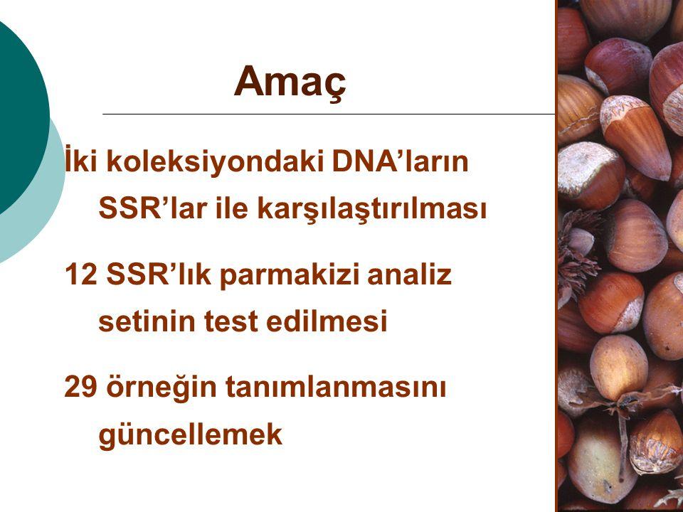 Amaç İki koleksiyondaki DNA'ların SSR'lar ile karşılaştırılması 12 SSR'lık parmakizi analiz setinin test edilmesi 29 örneğin tanımlanmasını güncelleme