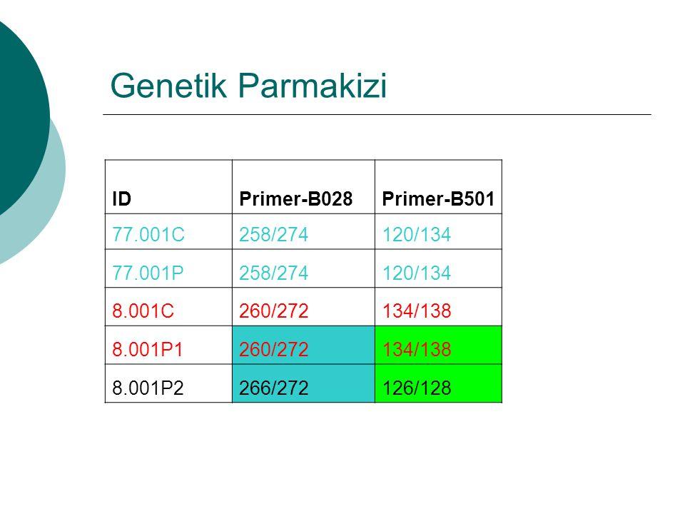 Genetik Parmakizi IDPrimer-B028Primer-B501 77.001C258/274120/134 77.001P258/274120/134 8.001C260/272134/138 8.001P1260/272134/138 8.001P2266/272126/12