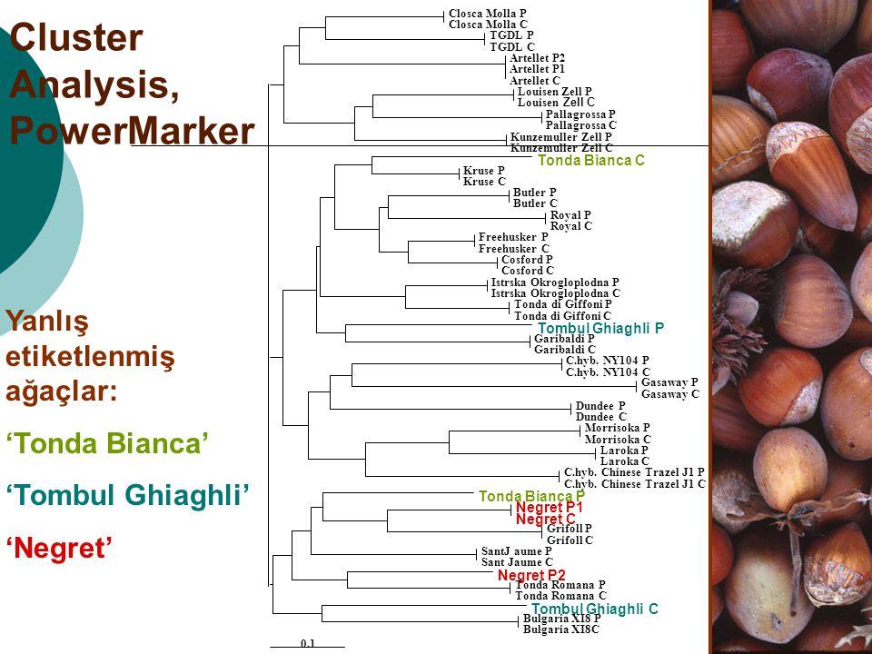 Cluster Analysis, PowerMarker Yanlış etiketlenmiş ağaçlar: 'Tonda Bianca' 'Tombul Ghiaghli' 'Negret'