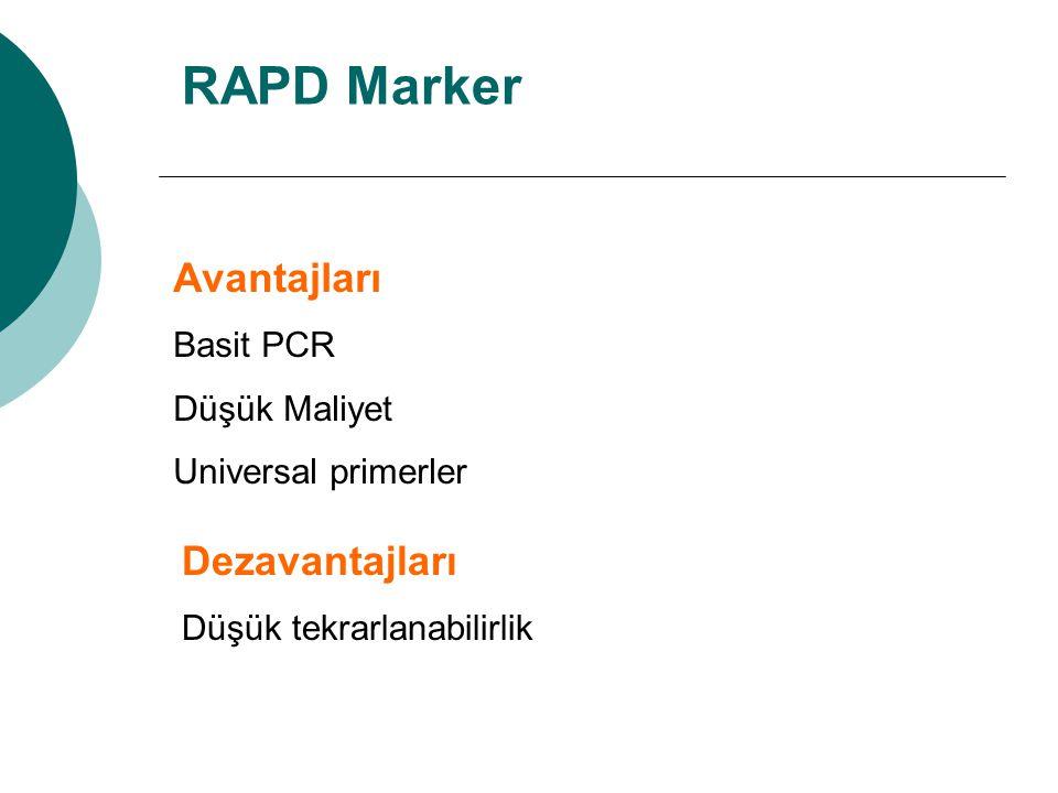 RAPD Marker Avantajları Basit PCR Düşük Maliyet Universal primerler Dezavantajları Düşük tekrarlanabilirlik