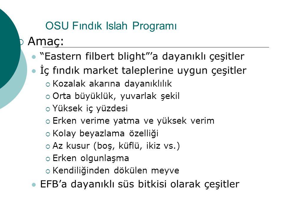 """OSU Fındık Islah Programı  Amaç: """"Eastern filbert blight""""'a dayanıklı çeşitler İç fındık market taleplerine uygun çeşitler  Kozalak akarına dayanıkl"""