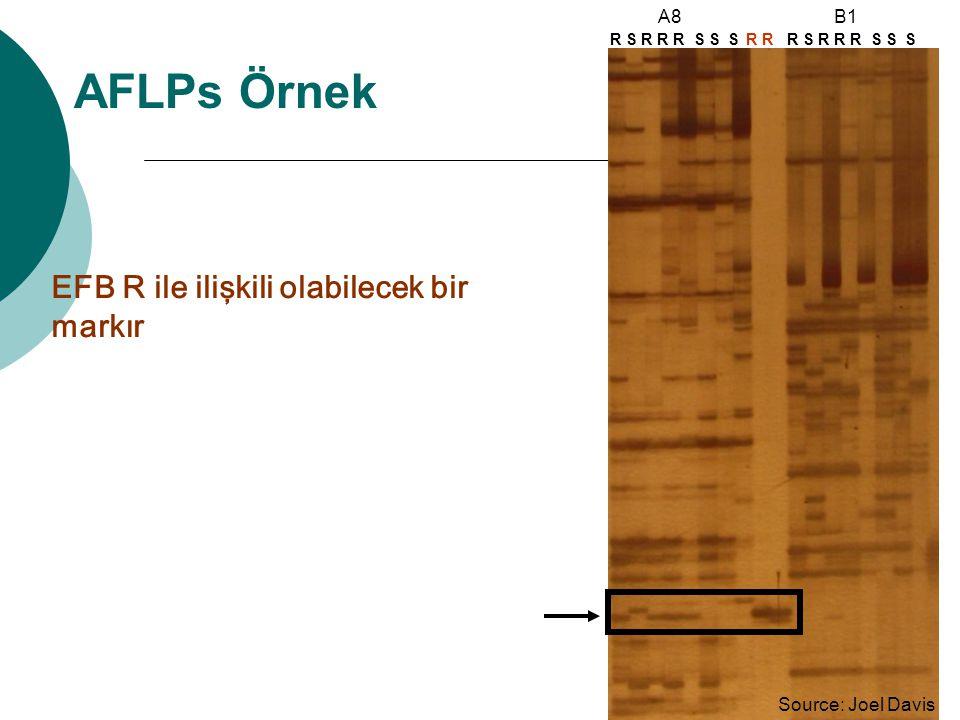 AFLPs Örnek Source: Joel Davis R S R R R S S S R A8 Source: Joel Davis EFB R ile ilişkili olabilecek bir markır B1