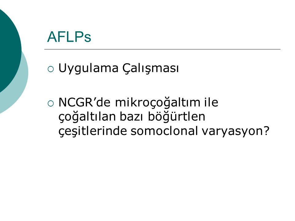 AFLPs  Uygulama Çalışması  NCGR'de mikroçoğaltım ile çoğaltılan bazı böğürtlen çeşitlerinde somoclonal varyasyon?