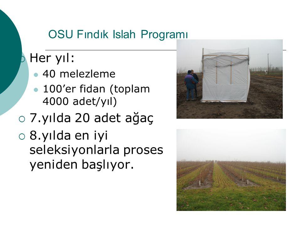OSU Fındık Islah Programı  Her yıl: 40 melezleme 100'er fidan (toplam 4000 adet/yıl)  7.yılda 20 adet ağaç  8.yılda en iyi seleksiyonlarla proses y
