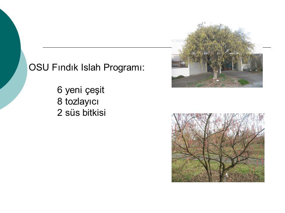 OSU Fındık Islah Programı: 6 yeni çeşit 8 tozlayıcı 2 süs bitkisi