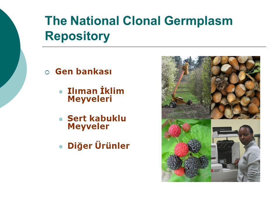 The National Clonal Germplasm Repository  Gen bankası Ilıman İklim Meyveleri Sert kabuklu Meyveler Diğer Ürünler