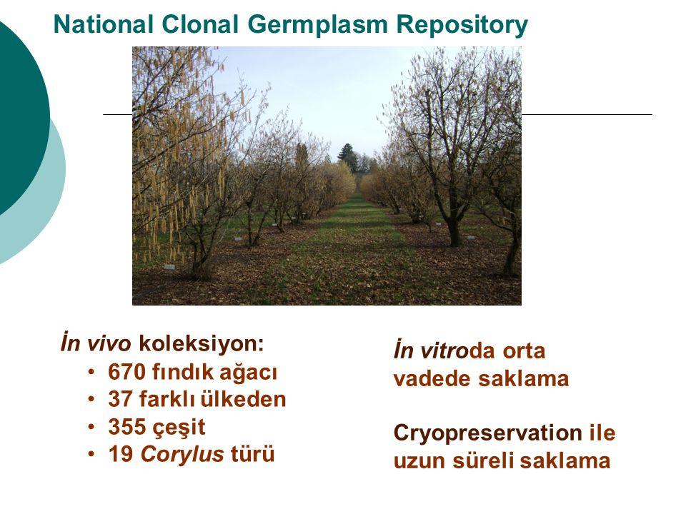 National Clonal Germplasm Repository İn vivo koleksiyon: 670 fındık ağacı 37 farklı ülkeden 355 çeşit 19 Corylus türü İn vitroda orta vadede saklama C