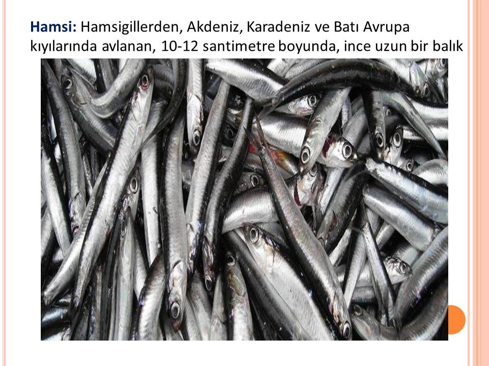 Hamsi: Hamsigillerden, Akdeniz, Karadeniz ve Batı Avrupa kıyılarında avlanan, 10-12 santimetre boyunda, ince uzun bir balık