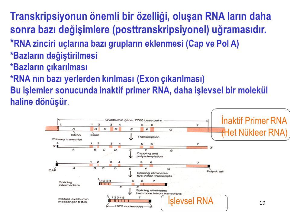 10 Transkripsiyonun önemli bir özelliği, oluşan RNA ların daha sonra bazı değişimlere (posttranskripsiyonel) uğramasıdır.