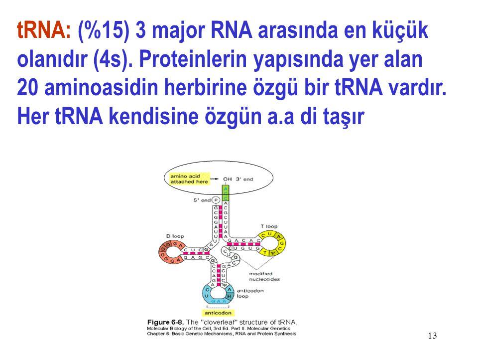 13 tRNA: (%15) 3 major RNA arasında en küçük olanıdır (4s).