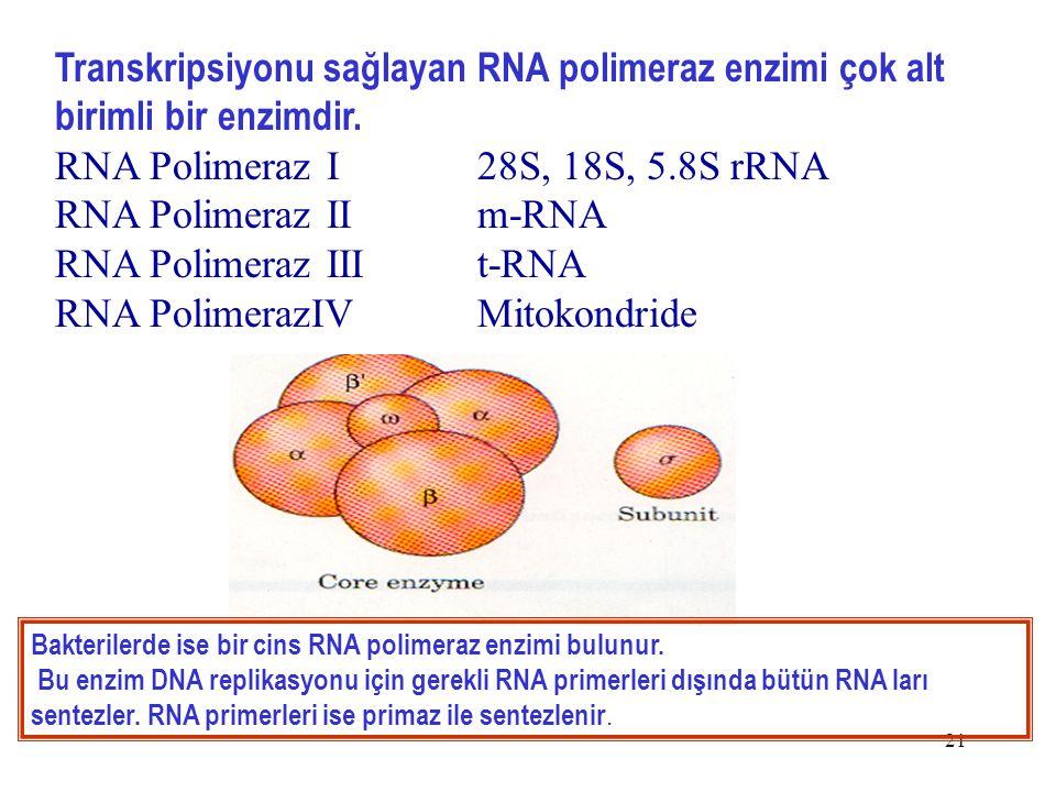 21 Transkripsiyonu sağlayan RNA polimeraz enzimi çok alt birimli bir enzimdir.