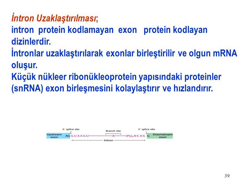 39 İntron Uzaklaştırılması ; intron protein kodlamayan exon protein kodlayan dizinlerdir.