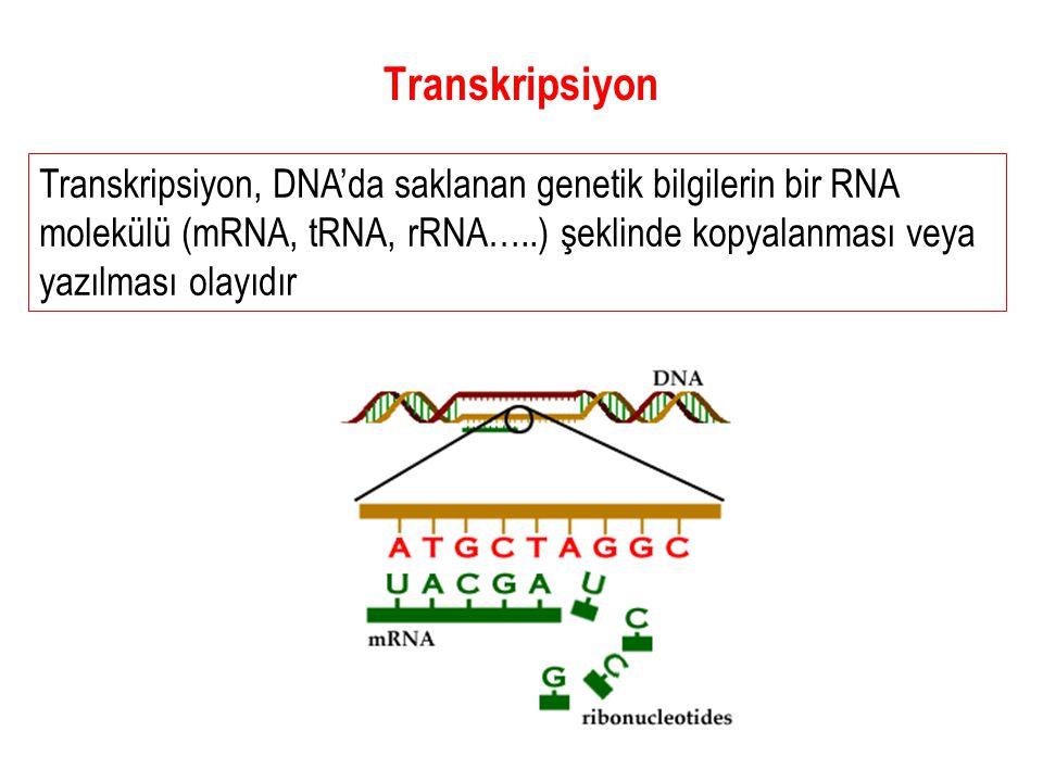 Transkripsiyon Transkripsiyon, DNA'da saklanan genetik bilgilerin bir RNA molekülü (mRNA, tRNA, rRNA…..) şeklinde kopyalanması veya yazılması olayıdır