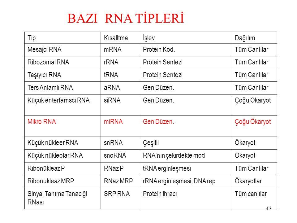 43 TipKısalltmaİşlevDağılım Mesajcı RNAmRNAProtein Kod.Tüm Canlılar Ribozomal RNArRNAProtein SenteziTüm Canlılar Taşıyıcı RNAtRNAProtein SenteziTüm Canlılar Ters Anlamlı RNAaRNAGen Düzen.Tüm Canlılar Küçük enterfarnscı RNAsiRNAGen Düzen.Çoğu Ökaryot Mikro RNAmiRNAGen Düzen.Çoğu Ökaryot Küçük nükleer RNAsnRNAÇeşitliÖkaryot Küçük nükleolar RNAsnoRNARNA nın çekirdekte modÖkaryot Ribonükleaz PRNaz PtRNA erginleşmesiTüm Canlılar Ribonükleaz MRPRNaz MRPrRNA erginleşmesi, DNA repÖkaryotlar Sinyal Tanıma Tanaciği RNası SRP RNAProtein ihracıTüm canlılar BAZI RNA TİPLERİ