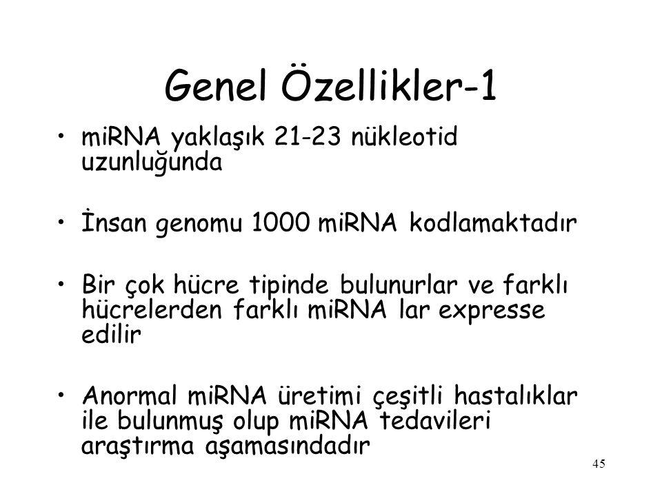 45 Genel Özellikler-1 miRNA yaklaşık 21-23 nükleotid uzunluğunda İnsan genomu 1000 miRNA kodlamaktadır Bir çok hücre tipinde bulunurlar ve farklı hücrelerden farklı miRNA lar expresse edilir Anormal miRNA üretimi çeşitli hastalıklar ile bulunmuş olup miRNA tedavileri araştırma aşamasındadır