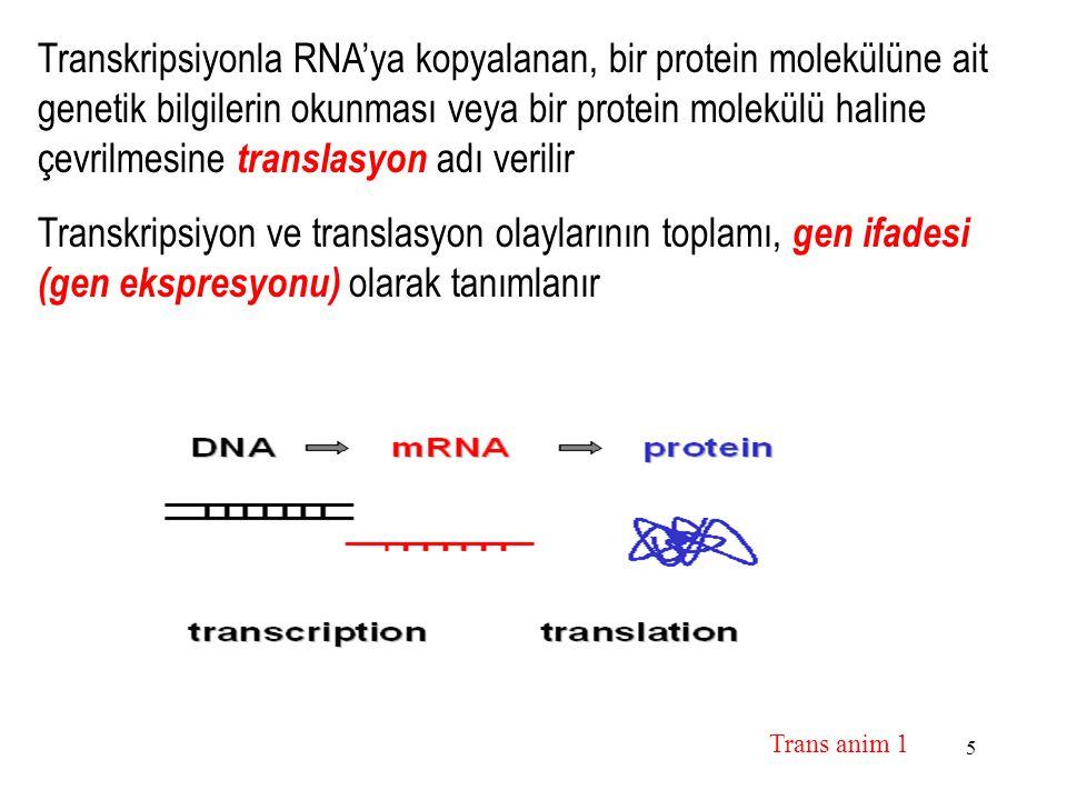 5 Transkripsiyonla RNA'ya kopyalanan, bir protein molekülüne ait genetik bilgilerin okunması veya bir protein molekülü haline çevrilmesine translasyon adı verilir Transkripsiyon ve translasyon olaylarının toplamı, gen ifadesi (gen ekspresyonu) olarak tanımlanır Trans anim 1