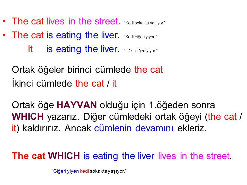 The cat lives in the street. Kedi sokakta yaşıyor. The cat is eating the liver.