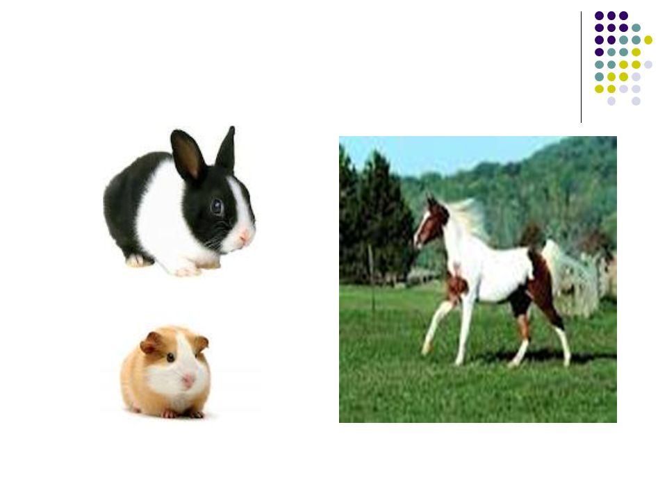 Evcil hayvanların temini Barınaklardan Hayvan sahiplerinden İnternetten Pet shop tan Sokaklardan