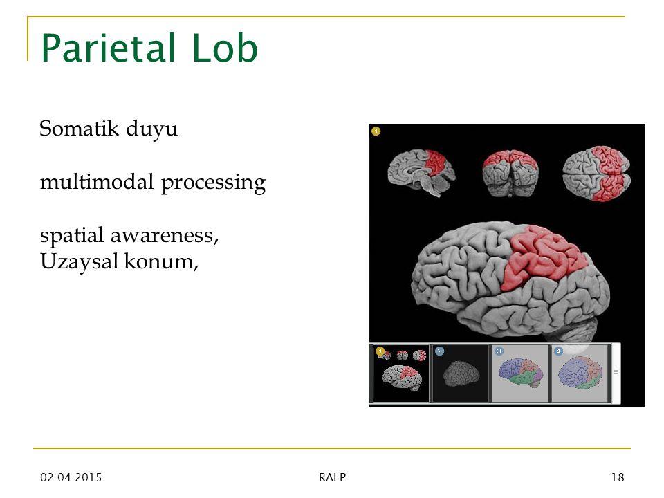 Parietal Lob Somatik duyu multimodal processing spatial awareness, Uzaysal konum, 02.04.201518 RALP