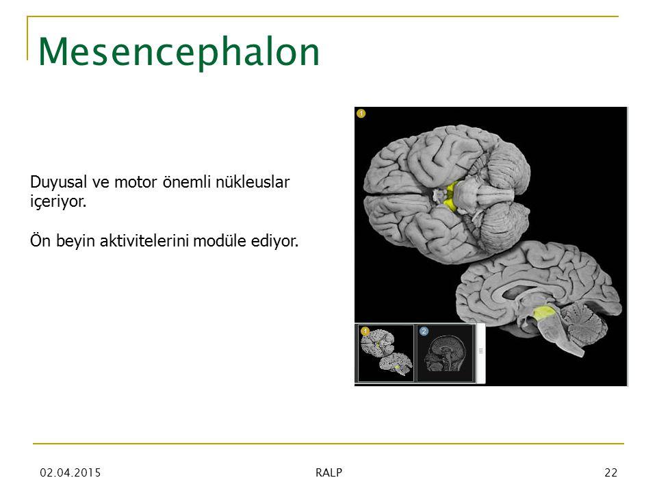 Mesencephalon Duyusal ve motor önemli nükleuslar içeriyor.