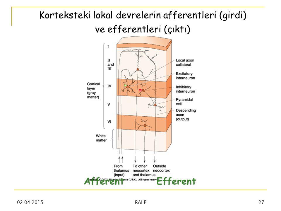 Korteksteki lokal devrelerin afferentleri (girdi) ve efferentleri (çıktı) AfferentEfferent 02.04.201527 RALP