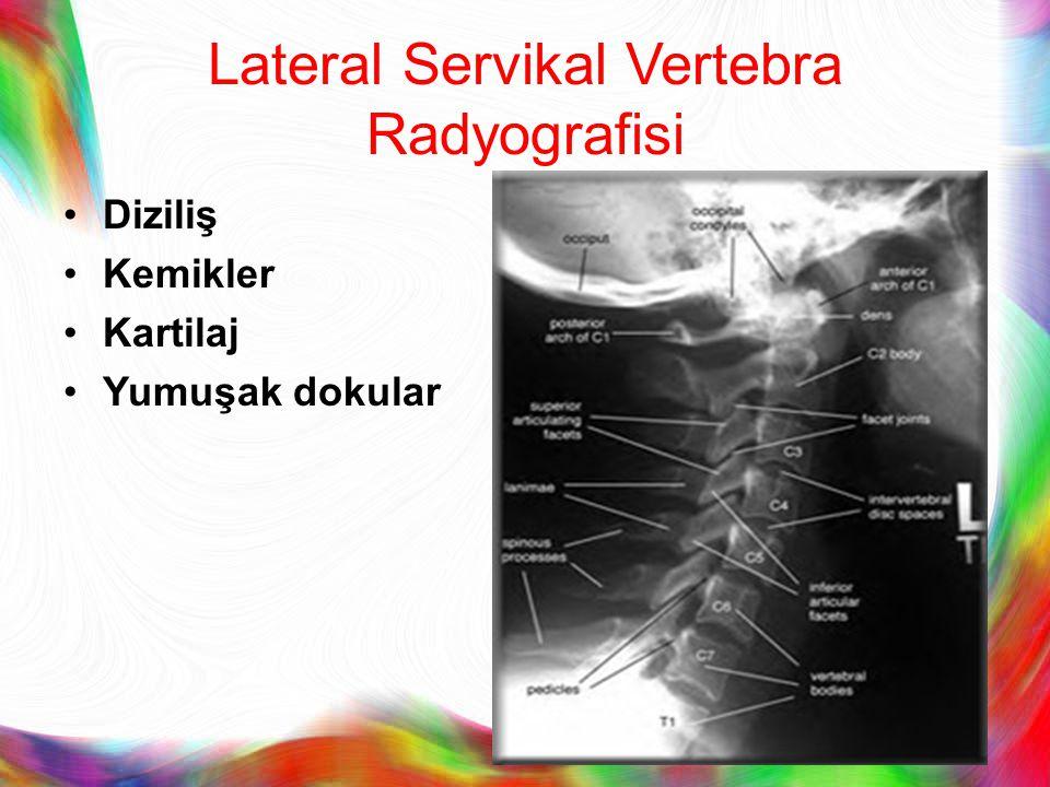 Lateral Servikal Vertebra Radyografisi Diziliş Kemikler Kartilaj Yumuşak dokular