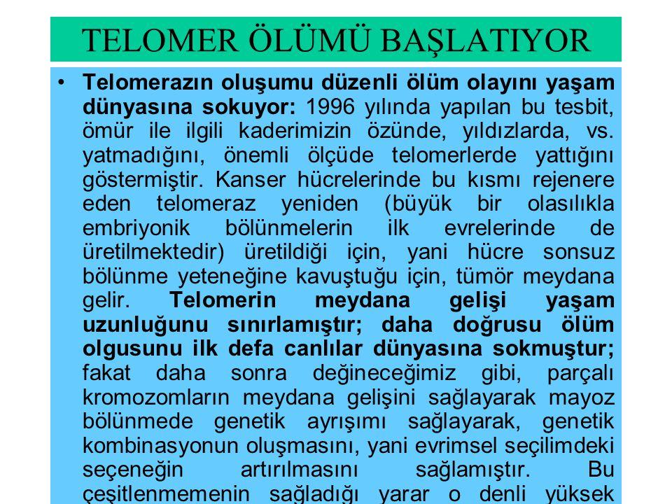 TELOMER ÖLÜMÜ BAŞLATIYOR Telomerazın oluşumu düzenli ölüm olayını yaşam dünyasına sokuyor: 1996 yılında yapılan bu tesbit, ömür ile ilgili kaderimizin