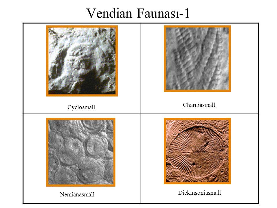 Vendian Faunası-1 Cyclosmall Charniasmall Nemianasmall Dickinsoniasmall