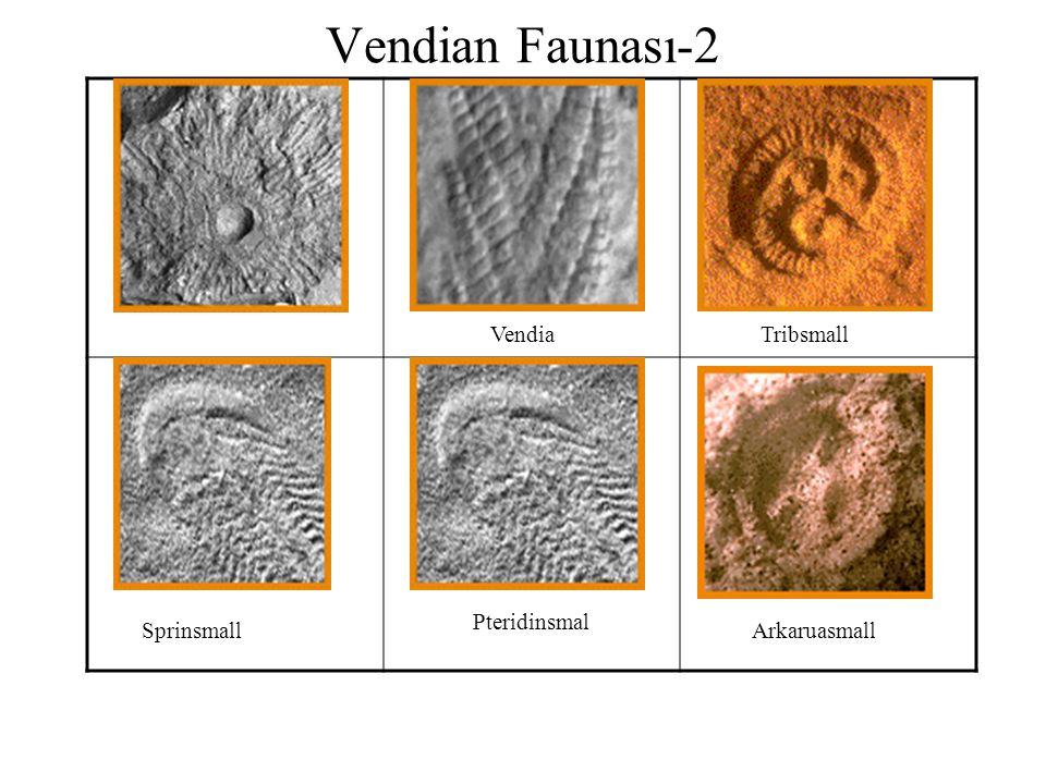 VendiaTribsmall Vendian Faunası-2 Sprinsmall Pteridinsmal Arkaruasmall