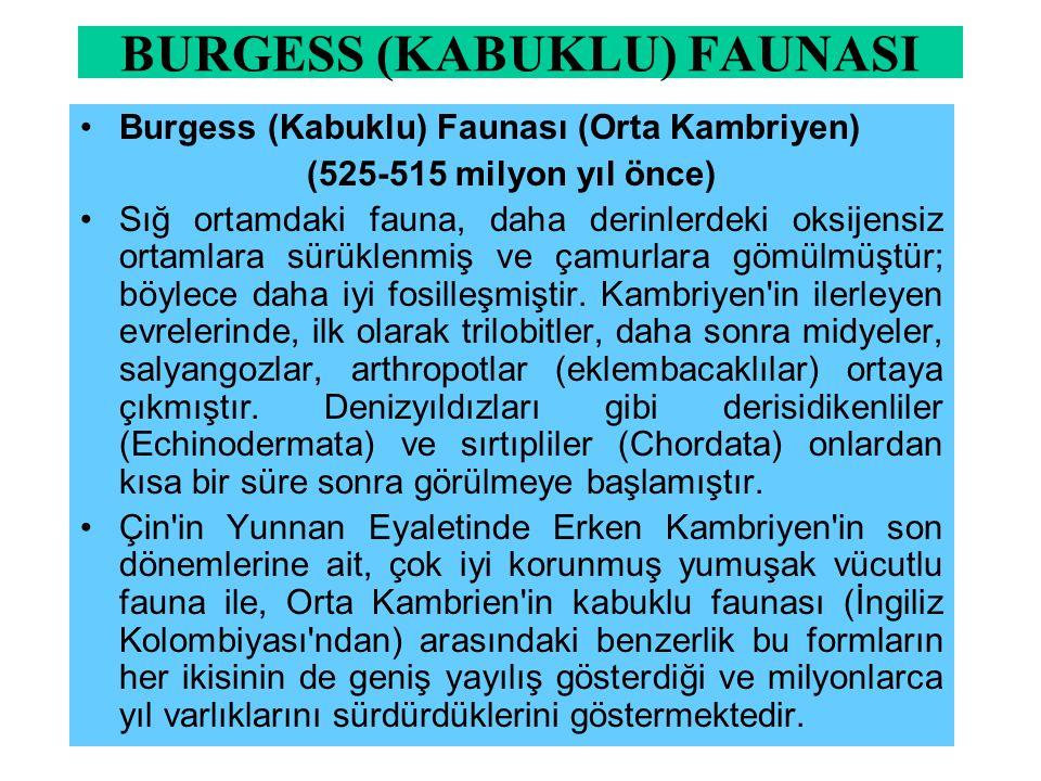 BURGESS (KABUKLU) FAUNASI Burgess (Kabuklu) Faunası (Orta Kambriyen) (525-515 milyon yıl önce) Sığ ortamdaki fauna, daha derinlerdeki oksijensiz ortam
