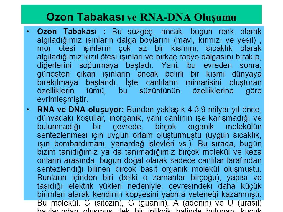 Ozon Tabakası ve RNA-DNA Oluşumu Ozon Tabakası : Bu süzgeç, ancak, bugün renk olarak algıladığımız ışınların dalga boylarını (mavi, kırmızı ve yeşil),