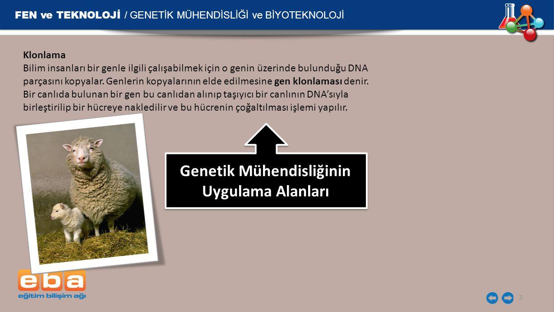 FEN ve TEKNOLOJİ / GENETİK MÜHENDİSLİĞİ ve BİYOTEKNOLOJİ 3 Klonlama Bilim insanları bir genle ilgili çalışabilmek için o genin üzerinde bulunduğu DNA parçasını kopyalar.