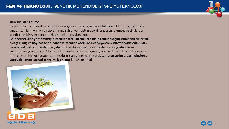 FEN ve TEKNOLOJİ / GENETİK MÜHENDİSLİĞİ ve BİYOTEKNOLOJİ 5 Türlerin Islah Edilmesi Bir türe istenilen özellikleri kazandırmak için yapılan çalışmalara