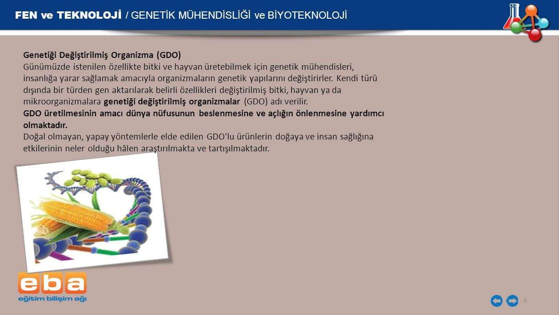 FEN ve TEKNOLOJİ / GENETİK MÜHENDİSLİĞİ ve BİYOTEKNOLOJİ 6 Genetiği Değiştirilmiş Organizma (GDO) Günümüzde istenilen özellikte bitki ve hayvan üretebilmek için genetik mühendisleri, insanlığa yarar sağlamak amacıyla organizmaların genetik yapılarını değiştirirler.