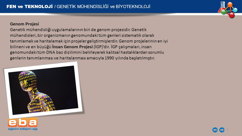FEN ve TEKNOLOJİ / GENETİK MÜHENDİSLİĞİ ve BİYOTEKNOLOJİ 7 Genom Projesi Genetik mühendisliği uygulamalarının biri de genom projesidir. Genetik mühend