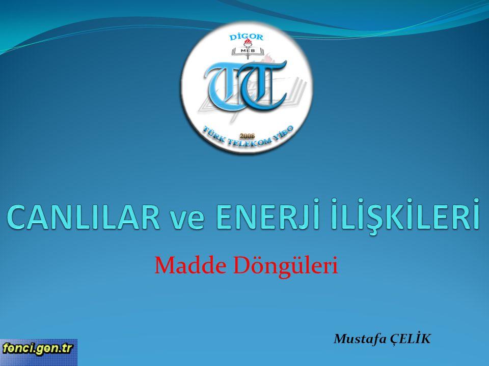 Madde Döngüleri Mustafa ÇELİK
