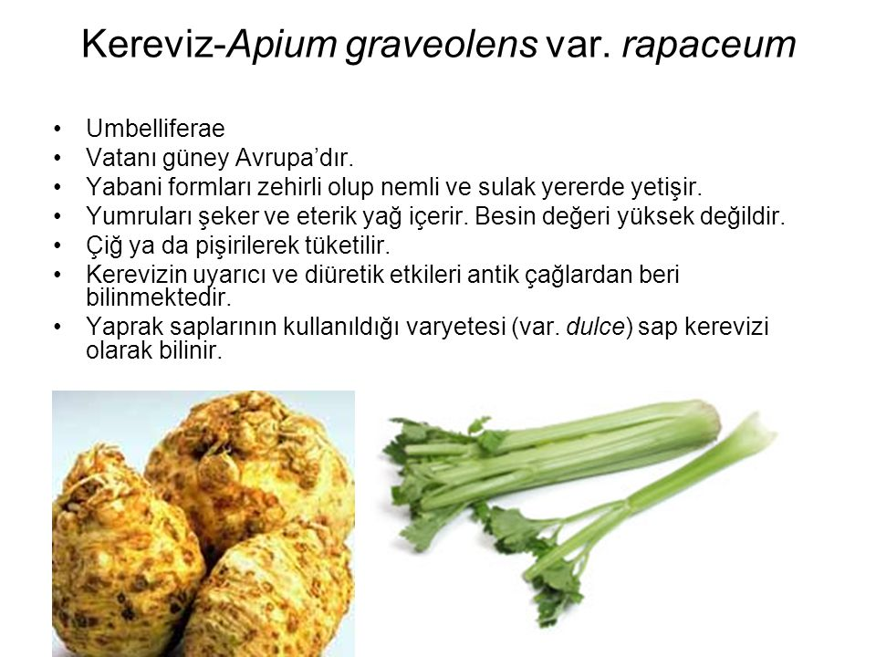 Kereviz-Apium graveolens var. rapaceum Umbelliferae Vatanı güney Avrupa'dır. Yabani formları zehirli olup nemli ve sulak yererde yetişir. Yumruları şe