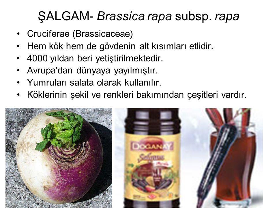 ŞALGAM- Brassica rapa subsp. rapa Cruciferae (Brassicaceae) Hem kök hem de gövdenin alt kısımları etlidir. 4000 yıldan beri yetiştirilmektedir. Avrupa