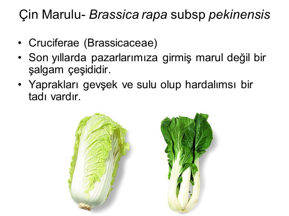 Çin Marulu- Brassica rapa subsp pekinensis Cruciferae (Brassicaceae) Son yıllarda pazarlarımıza girmiş marul değil bir şalgam çeşididir. Yaprakları ge