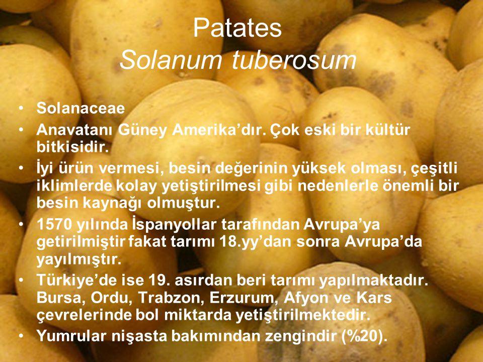 Patates Solanum tuberosum Solanaceae Anavatanı Güney Amerika'dır. Çok eski bir kültür bitkisidir. İyi ürün vermesi, besin değerinin yüksek olması, çeş