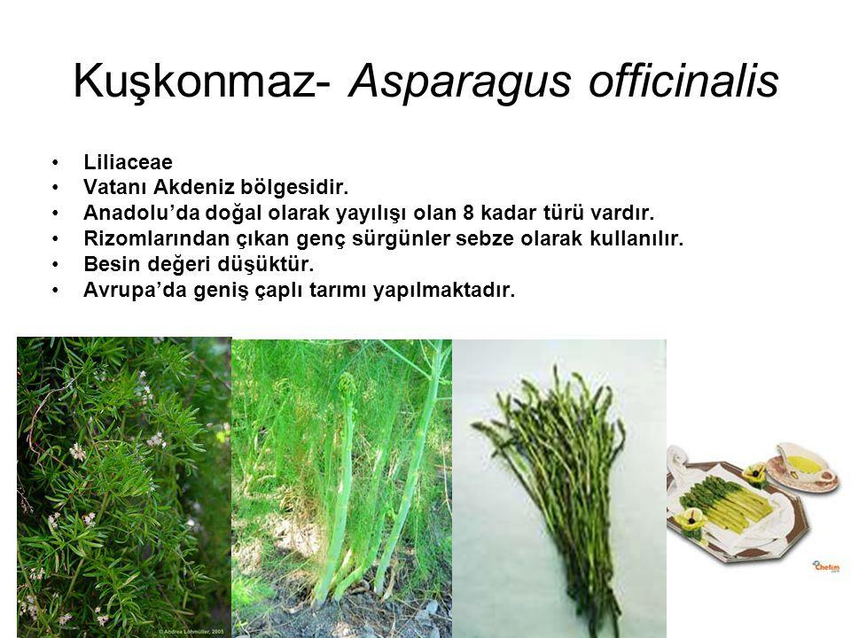 Kuşkonmaz- Asparagus officinalis Liliaceae Vatanı Akdeniz bölgesidir. Anadolu'da doğal olarak yayılışı olan 8 kadar türü vardır. Rizomlarından çıkan g