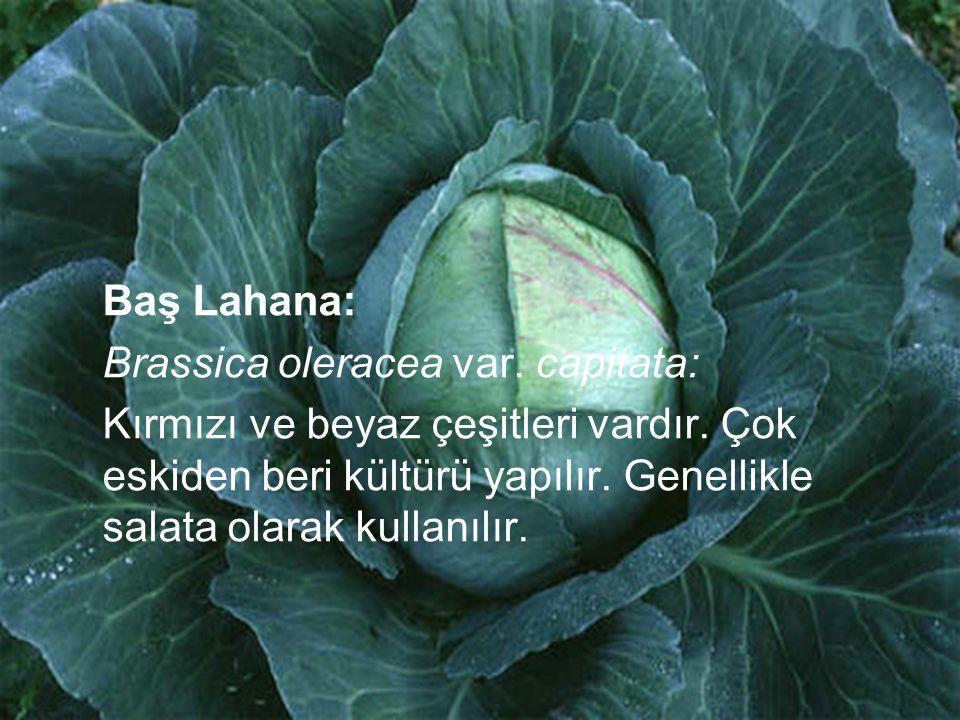 Baş Lahana: Brassica oleracea var. capitata: Kırmızı ve beyaz çeşitleri vardır. Çok eskiden beri kültürü yapılır. Genellikle salata olarak kullanılır.