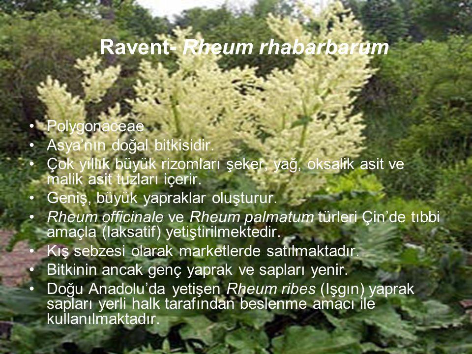 Ravent- Rheum rhabarbarum Polygonaceae Asya'nın doğal bitkisidir. Çok yıllık büyük rizomları şeker, yağ, oksalik asit ve malik asit tuzları içerir. Ge