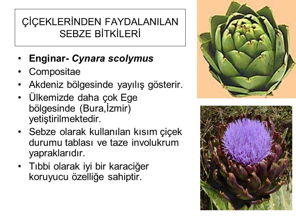 ÇİÇEKLERİNDEN FAYDALANILAN SEBZE BİTKİLERİ Enginar- Cynara scolymus Compositae Akdeniz bölgesinde yayılış gösterir. Ülkemizde daha çok Ege bölgesinde
