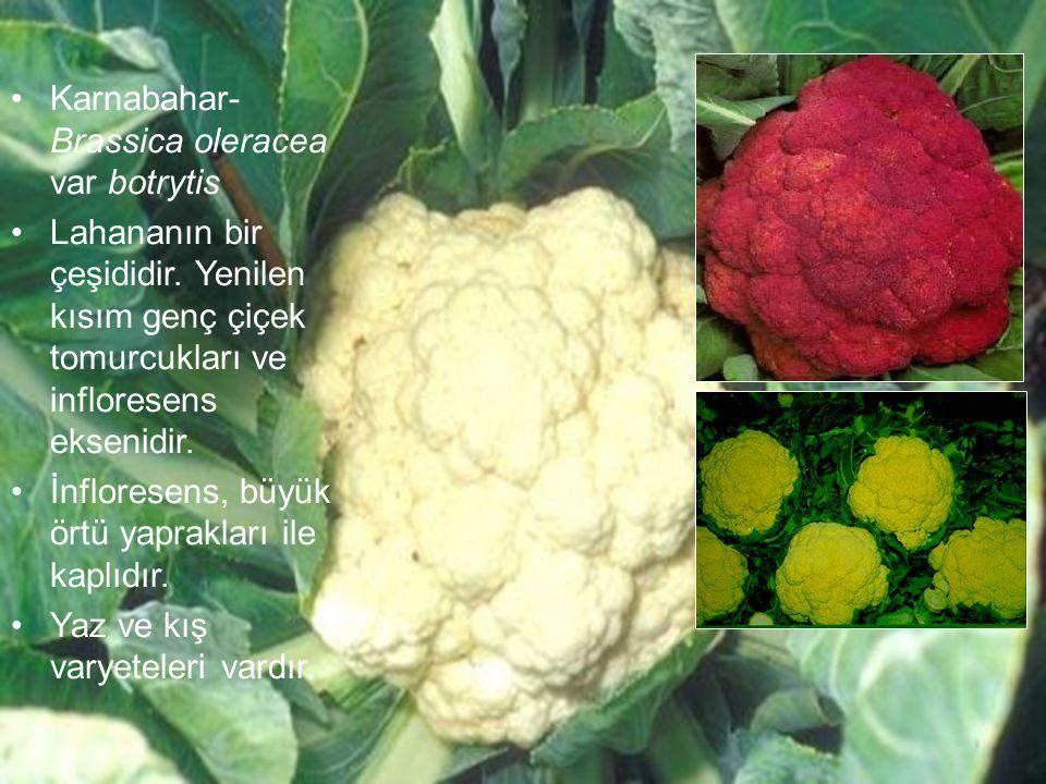 Karnabahar- Brassica oleracea var botrytis Lahananın bir çeşididir. Yenilen kısım genç çiçek tomurcukları ve infloresens eksenidir. İnfloresens, büyük